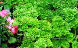 Green Herbs-L2H