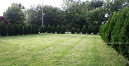 Green Lawn and Border-L2H