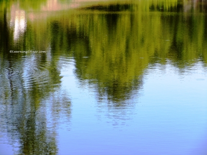 Green Reflection-L2H