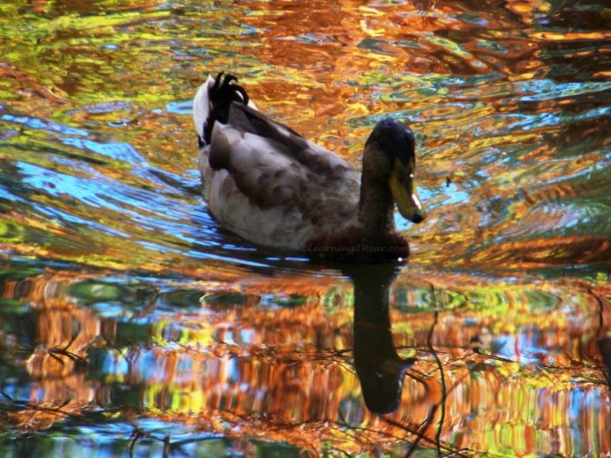 Reflected Duck-L2H