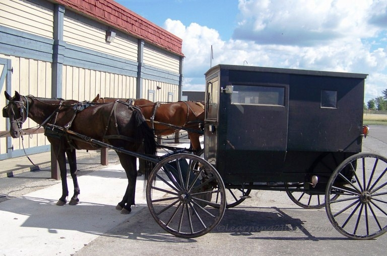 Amish Horse-Buggy