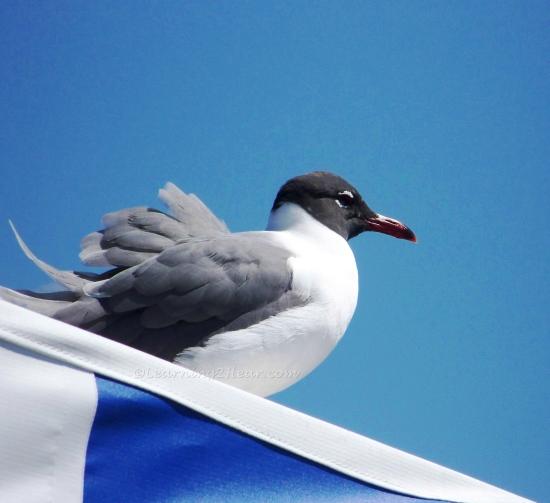 Bird on Boat Canopy