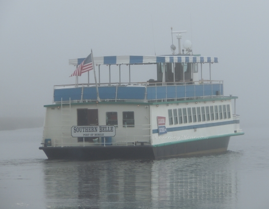 Foggy Southern Belle