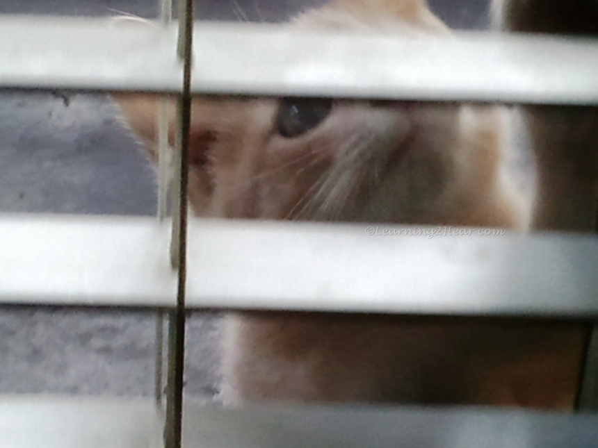 Kitten Wants In