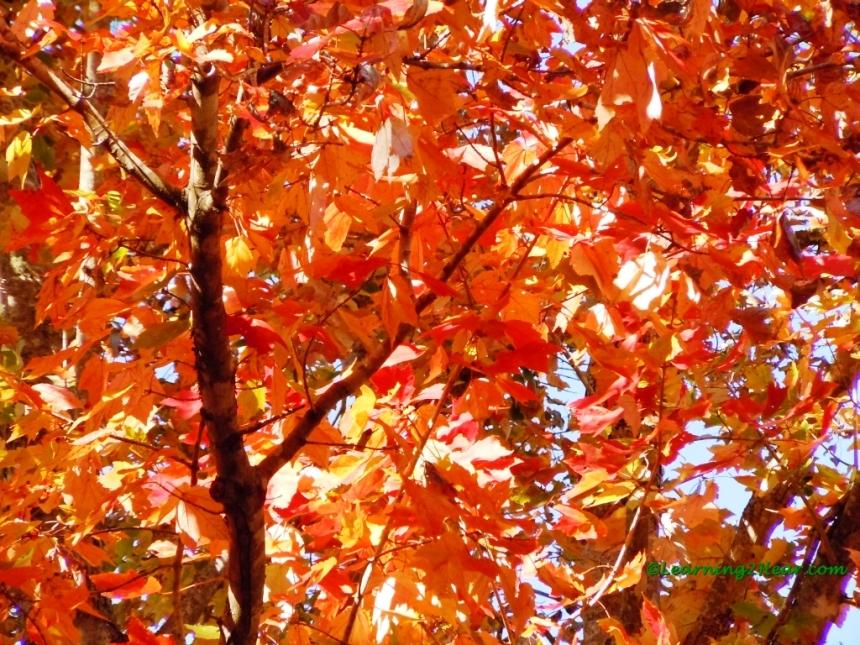 Light in Fall Leaves