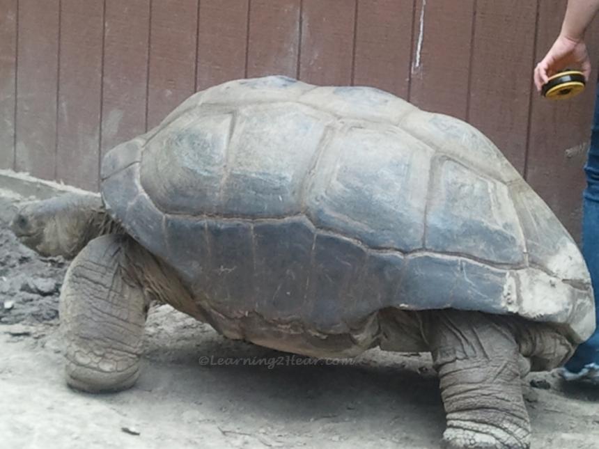 Grand Turtle